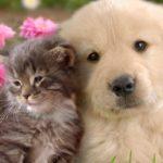 ANIMALES EN COMUNIDAD. PROBLEMAS EN LA CONVIVENCIA COMO UN MIEMBRO MAS DE LA FAMILIA